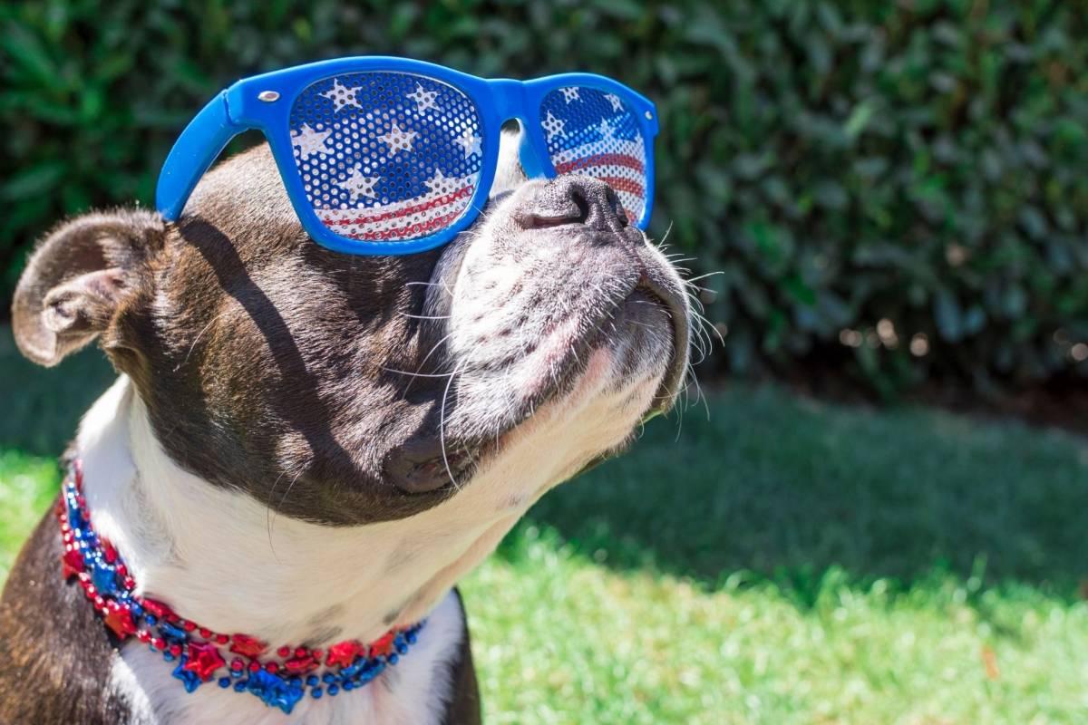 Fourth of July Doggo